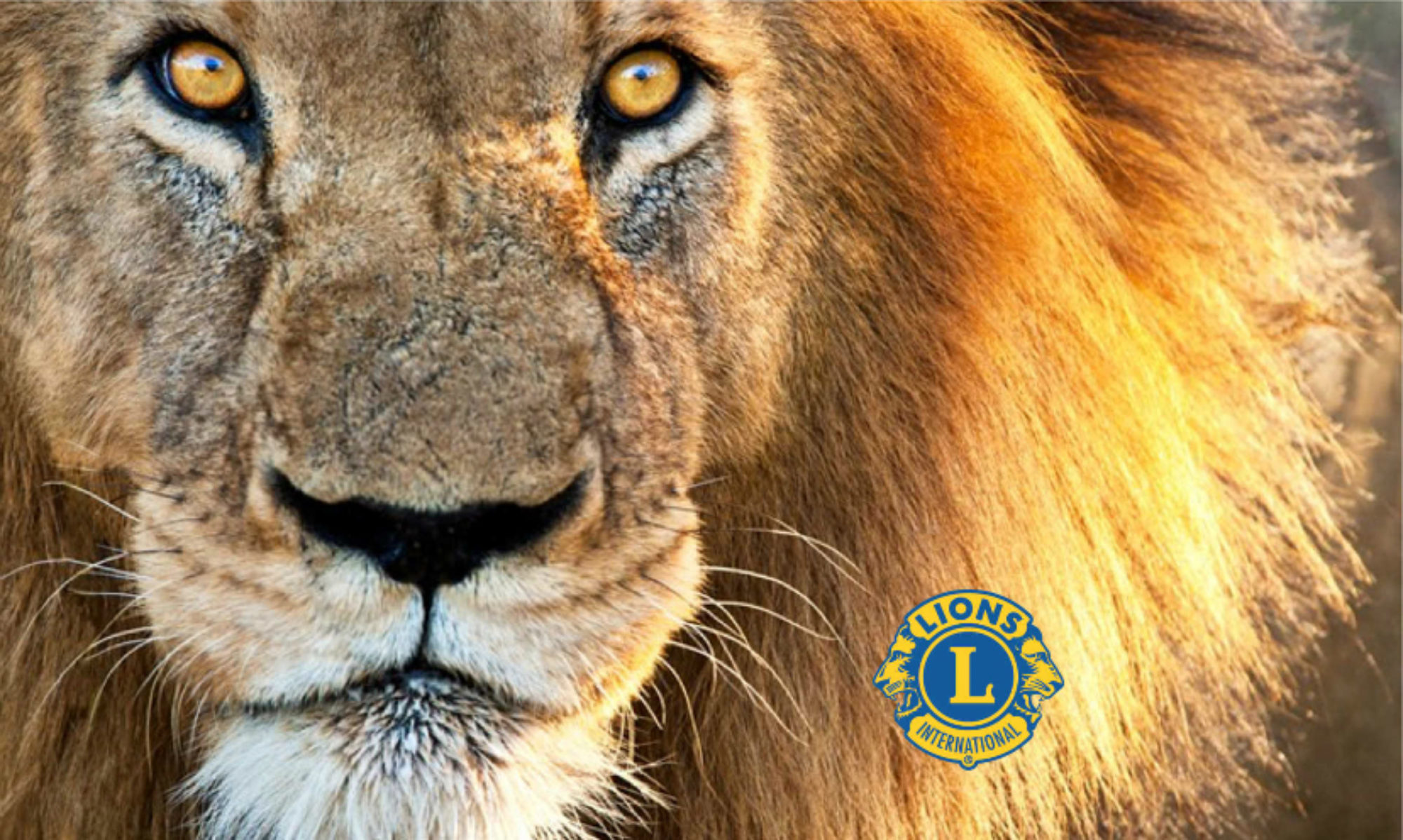 Elmet Lions Club Scrubs website